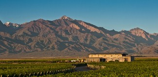 The Vines of Mendoza